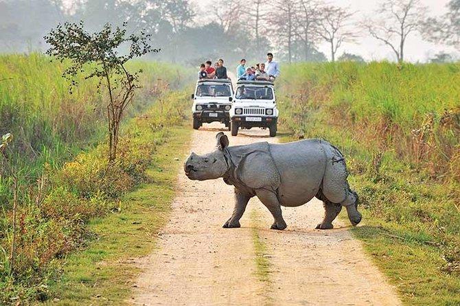 Wildlife of Assam