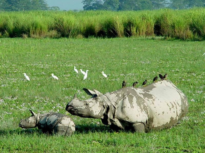 The Rhino Land
